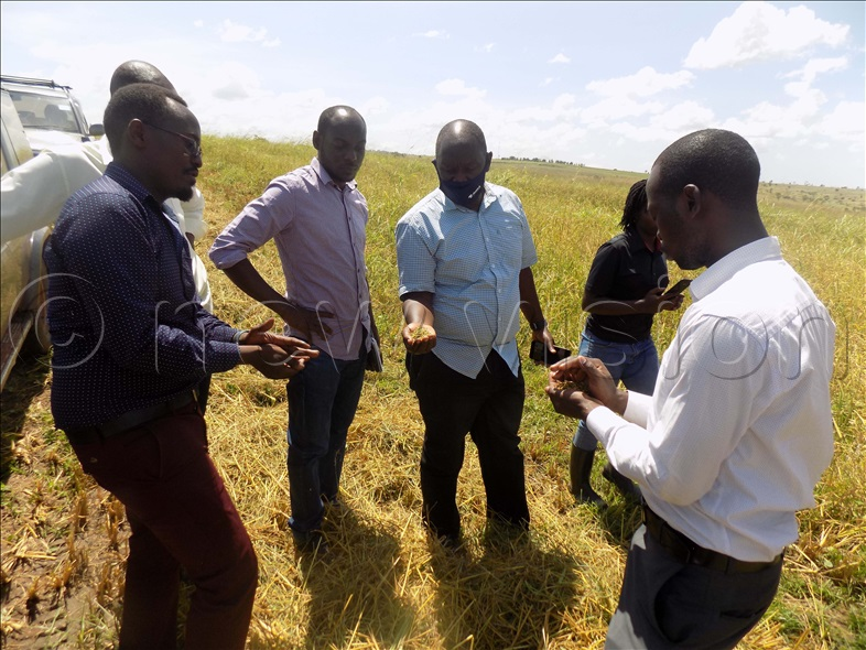 AGRA Kilimo team in Northern Uganda checking on rice farmers to find out if their interventions are helping farmers increase productivity.