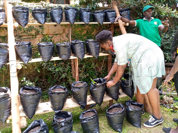 Nyakwezi Trains Youth To Start Back Yard Gardens In Their Homes